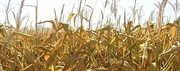 Allarme siccità: Ferrara chiede lo stato di calamità