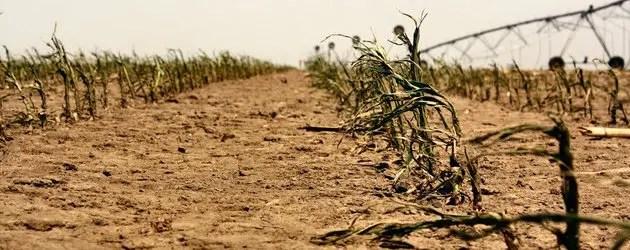 Caldo e siccità mettono in crisi l'agricoltura e l'allevamento