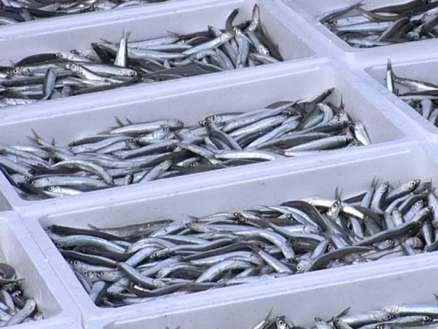 Pesca e alimentazione sostenibile per Expo 2015 – VIDEO