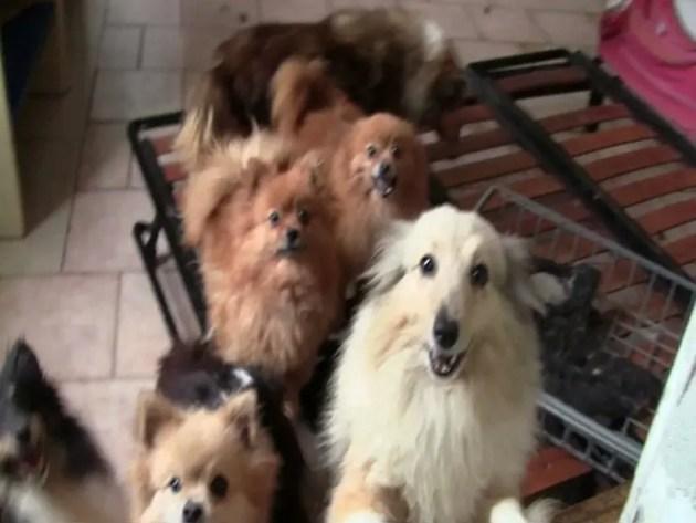 Allevamento abusivo a Viconovo, sequestrati 34 cani in pessime condizioni – VIDEO