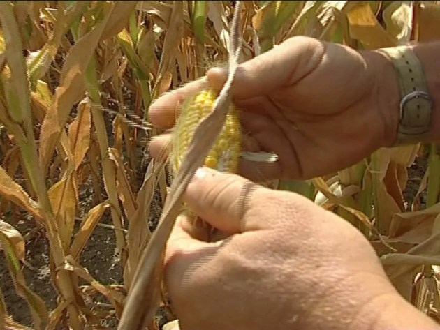 """Cia: """"La siccità è ormai uno """"stato di calamità"""" permanente"""""""