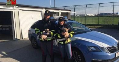 cani polizia stradale