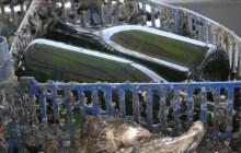 Nella Sacca di Goro nasce la simbiosi fra vino e ostrica – VIDEO