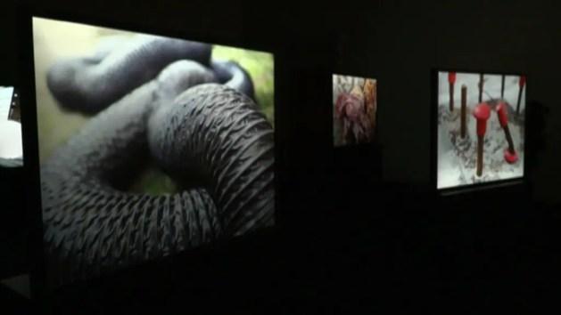 A Bologna la mostra fotografica sull'impianto del Gruppo Hera – VIDEO