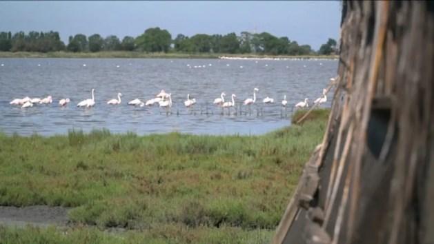 Tour dei parchi, la Regione parte dal Delta del Po – VIDEO