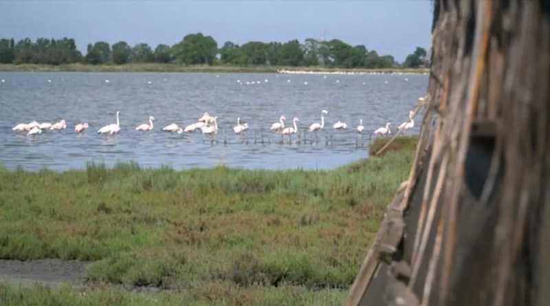 delta parco delta