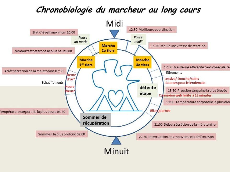 Chronobiologie