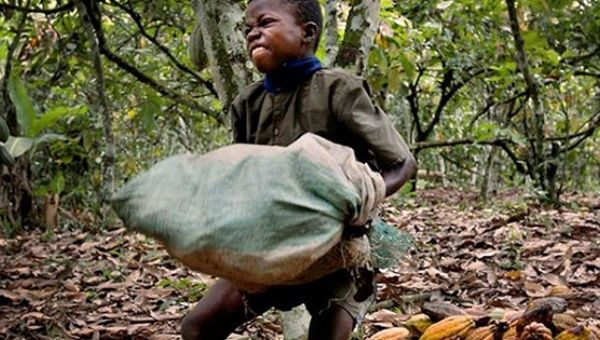 Nestle has been using enslaved children to harvest cheap cocoa in Ivory Coast, Africa.