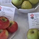 Gyümölcs-, zöldség- és virágkiállítás Rimaszombatban