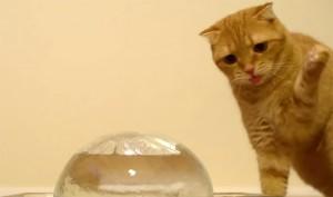 jeges macska
