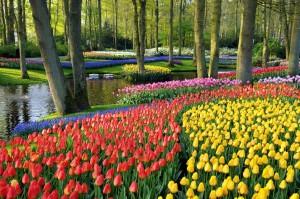 Keukenhof-Gardens-Holland-