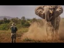 A vad segélykiáltása
