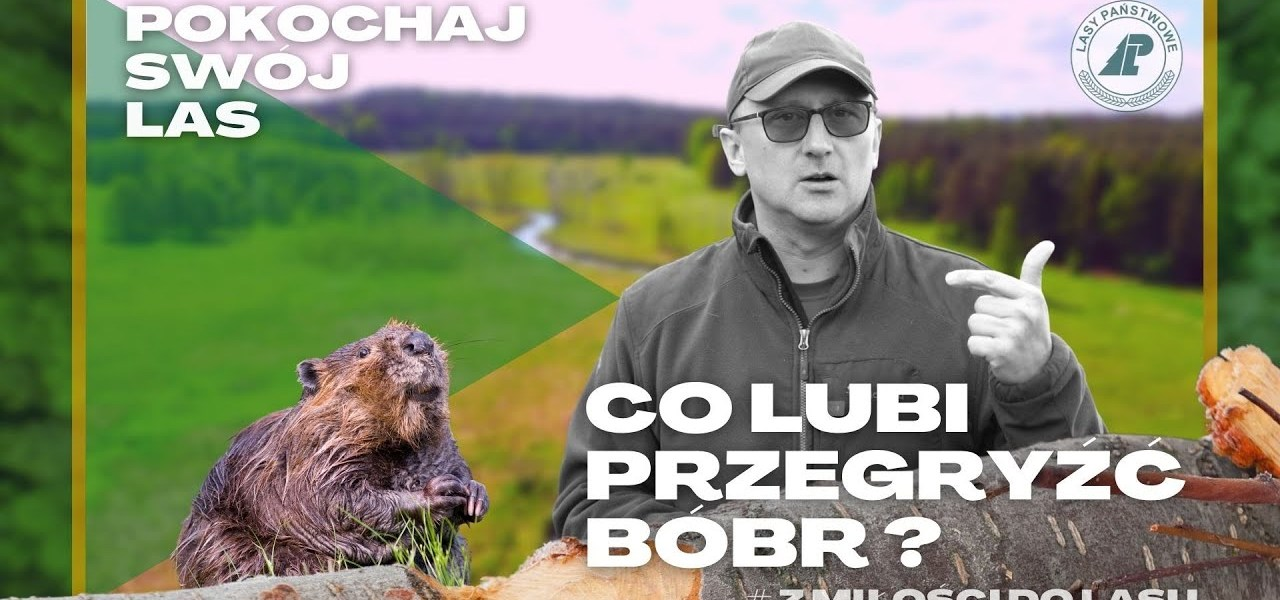 Odkrywamy TAJEMNICE bobrów!  Co lubią przegryźć NAJWIĘKSZE GRYZONIE w Polsce o 15 cm SIEKACZACH? #20