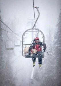 avalanche dog, Telluride, ski patrol