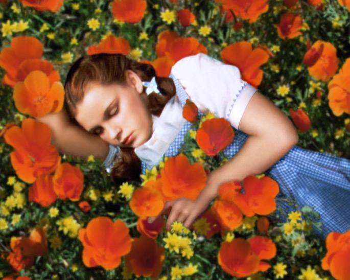 Dorothy poppy field