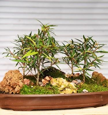 Bonsai Forest 3