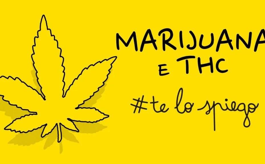 thumbnail che cos'è e come funziona la marijuana telospiego