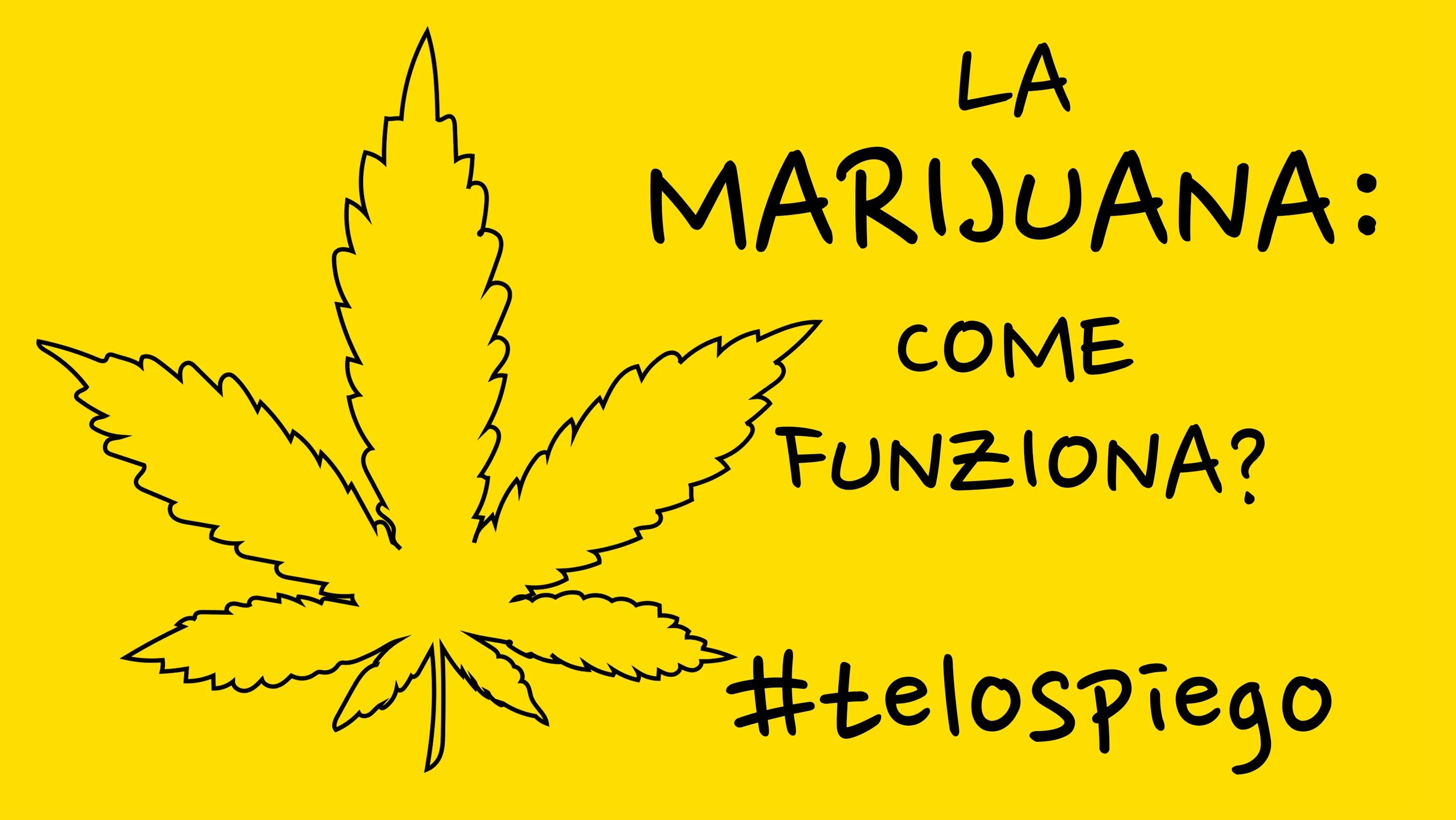 COME FUNZIONA LA #MARIJUANA? #TELOSPIEGO