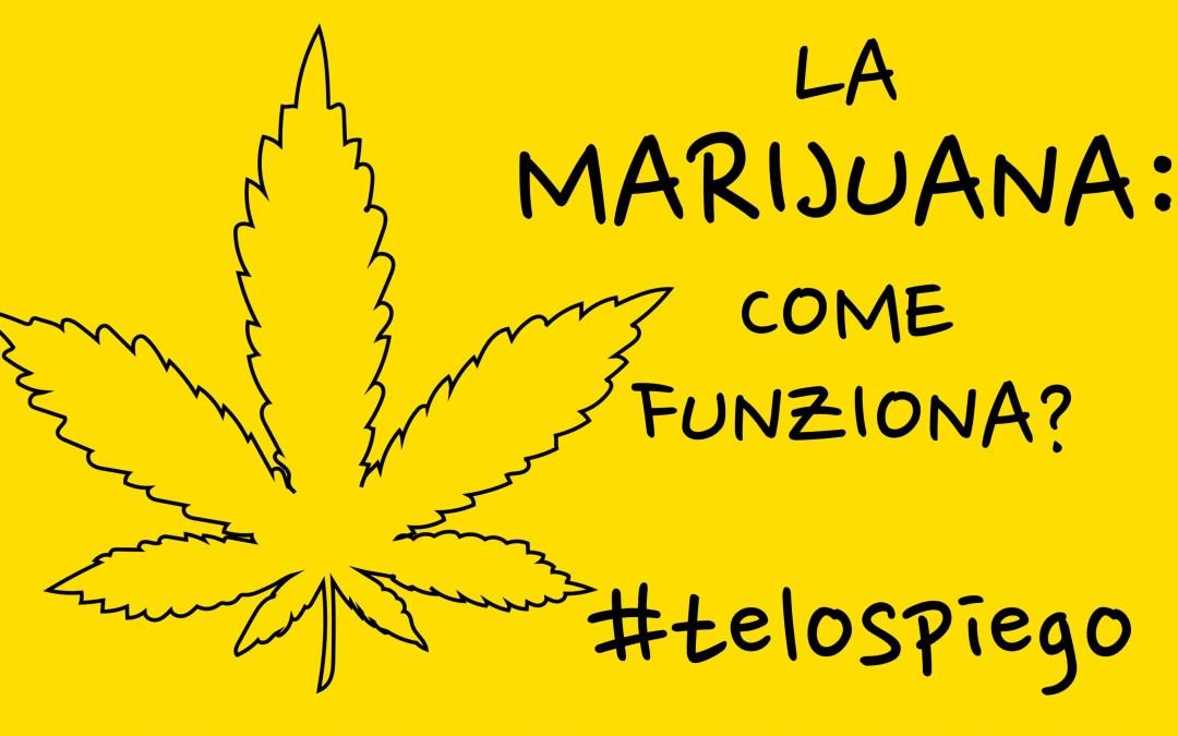 Come funziona la #Marijuana? #TELOSPIEGO!