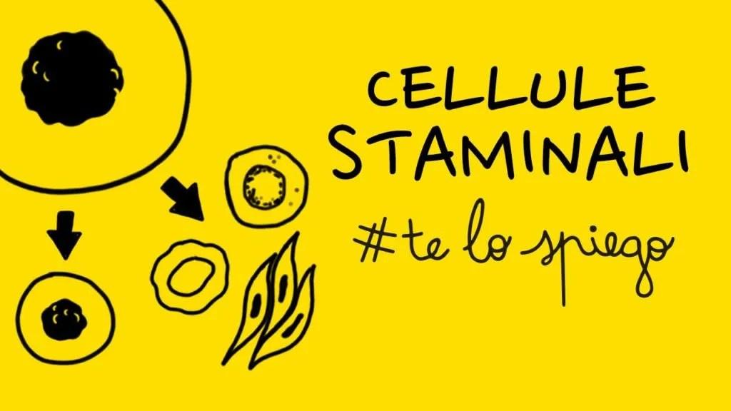 CHE COSA SONO E COME FUNZIONANO LE CELLULE STAMINALI: #TELOSPIEGO!