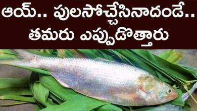 Photo of Huge Demand for Godavari Pulasa fish despite of Huge Cost too