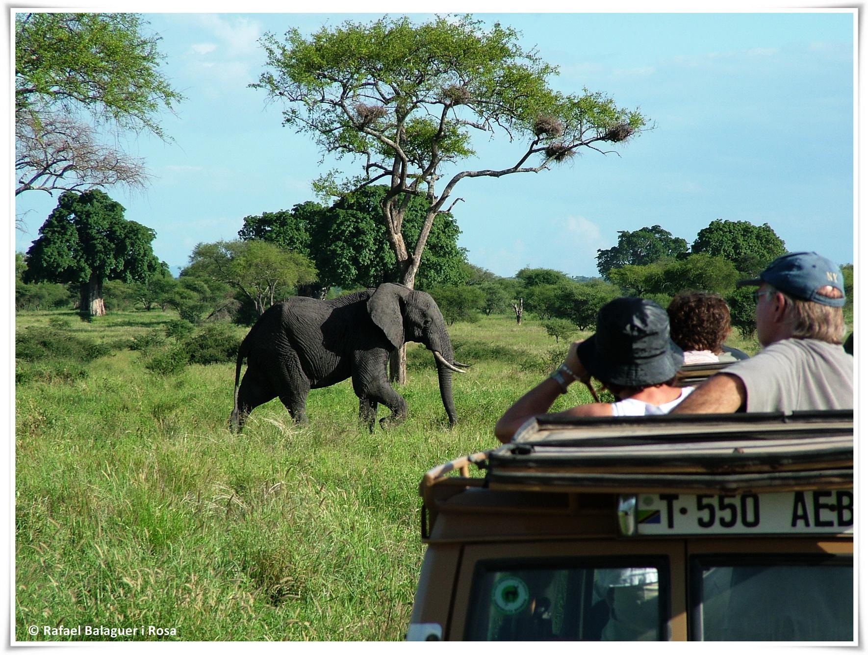 Elefant a Tarangire