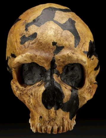 Neandertal 1 de Shanidar