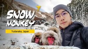 Snow Monkey Park เที่ยวญี่ปุ่น ดูลิงหิมะ แช่ออนเซ็น