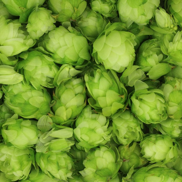 hop cones green abstract background