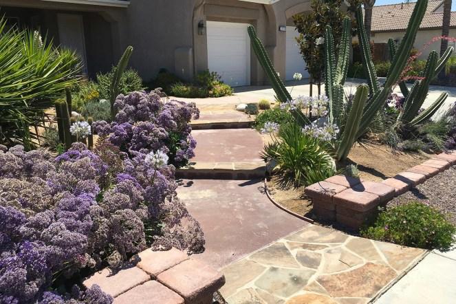 Arid garden 2