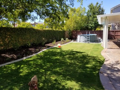Grass, plantings and pool