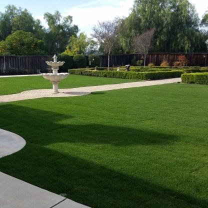 Grass, Rose Gardens