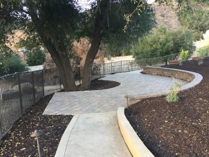 Paver patio around an Oak Tree