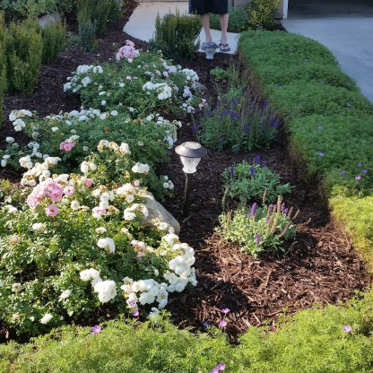 Cottage plantings in front yard