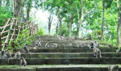 Monkey Park Goa Kreo Semarang