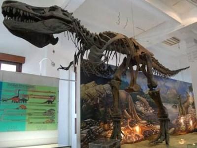 Koleksi museum geologi Bandung 3