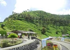 Wisata Cisarua Bogor