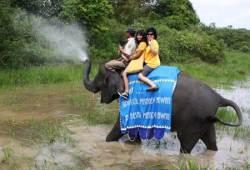 TAMAN NASIONAL WAY KAMBAS, AFRIKANYA INDONESIA