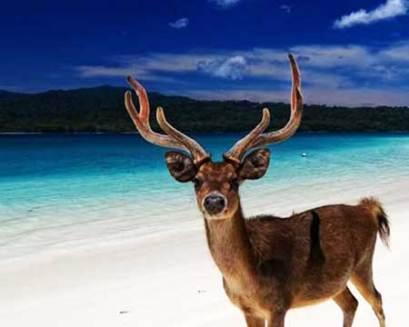 Pulau Peucang tour