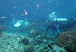INDONESIA THE BEST DIVE DESTINATION 2017