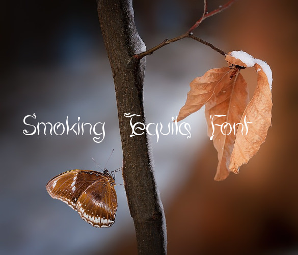 smoke fonts 2641