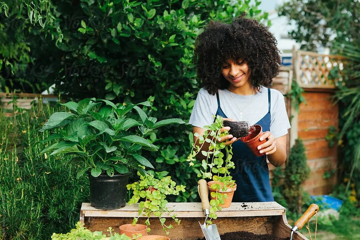 The Newbie's Guide To Plant Parenting