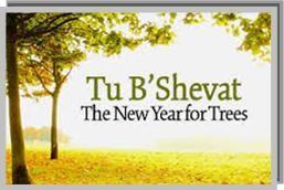 Image result for tu bishvat images