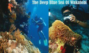 The Deep Blue Sea Of Wakatobi