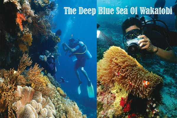 The Deep Blue Sea Of Wakatobi