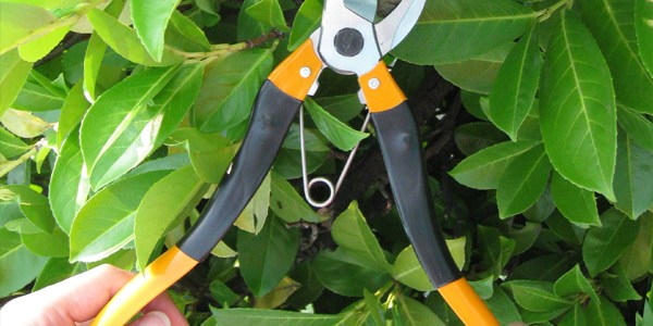 Handy the Exclusive Nishigaki 2-in-1 Lopper and Pruner Made in Japan