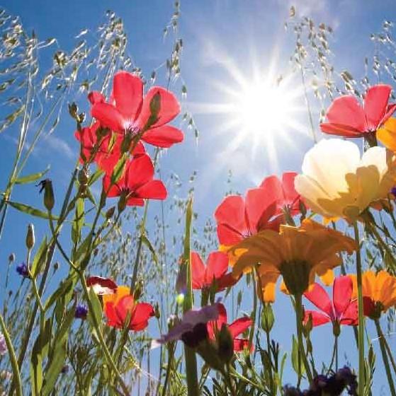offerte di primavera