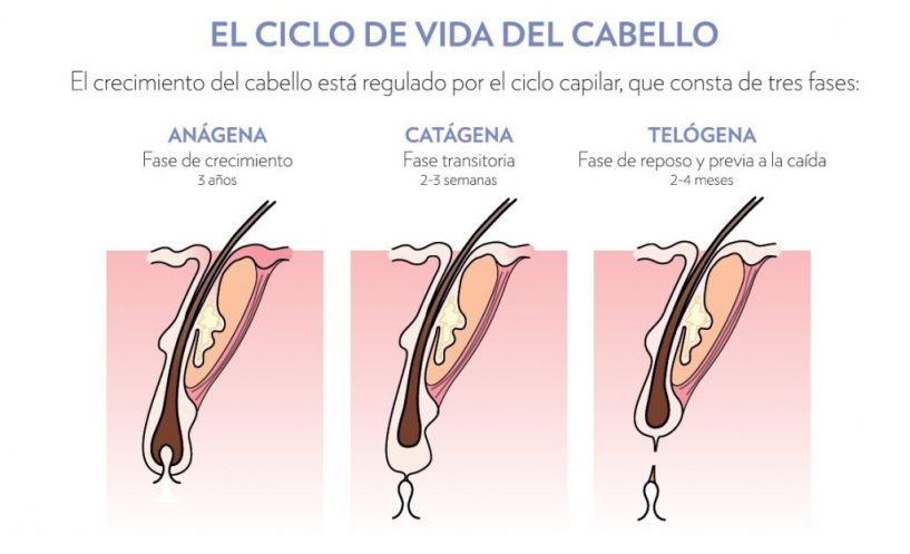 Efluvio Telogeno - Ciclo del Cabello
