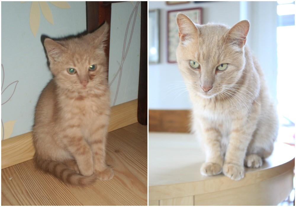 katinas-mazas-didelis