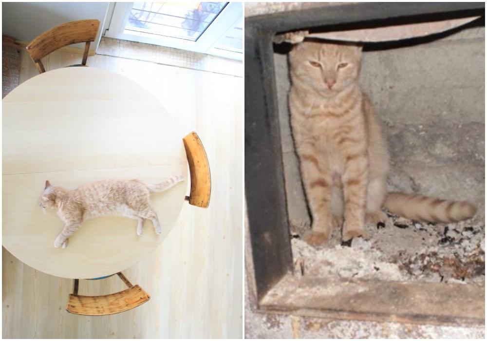 katinas-netiketose-vietose